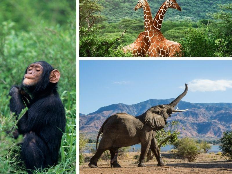 Les valeurs du patrimoine mondial du parc national de Tai